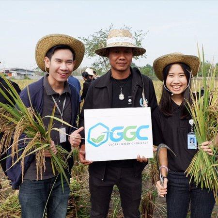 """GGC ร่วมกิจกรรม """"ทำดีเพื่อพ่อ อนุรักษ์ประเพณีลงแขกเกี่ยวข้าว"""" ณ ชุมชนเกาะกก จังหวัดระยอง"""